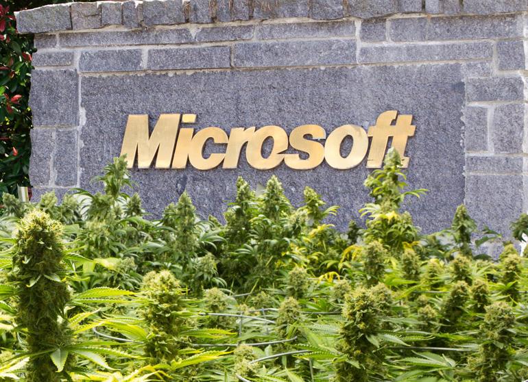 microsoft-marijuana